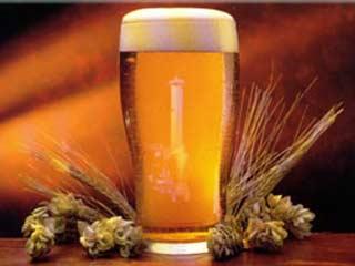 США: американские ученые утверждают, что пиво полезно для костей
