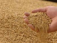 Новость на Казах-зерно:В 2011 г. мировые цены на зерно будут нестабильными – Bunge Ltd