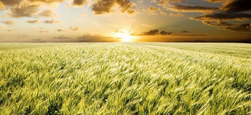 Кто спасет аграрку Казахстана