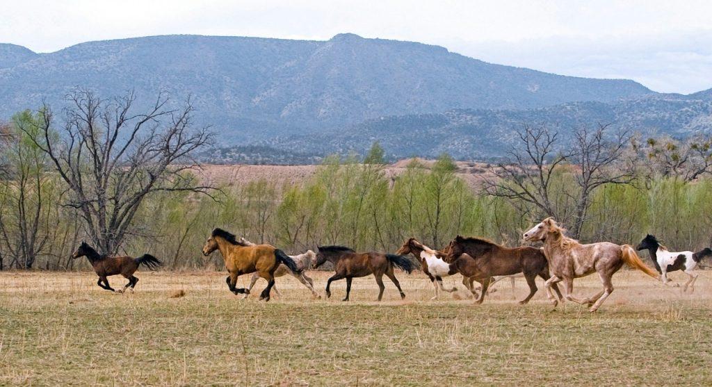От COVID защитят кымыз и конина