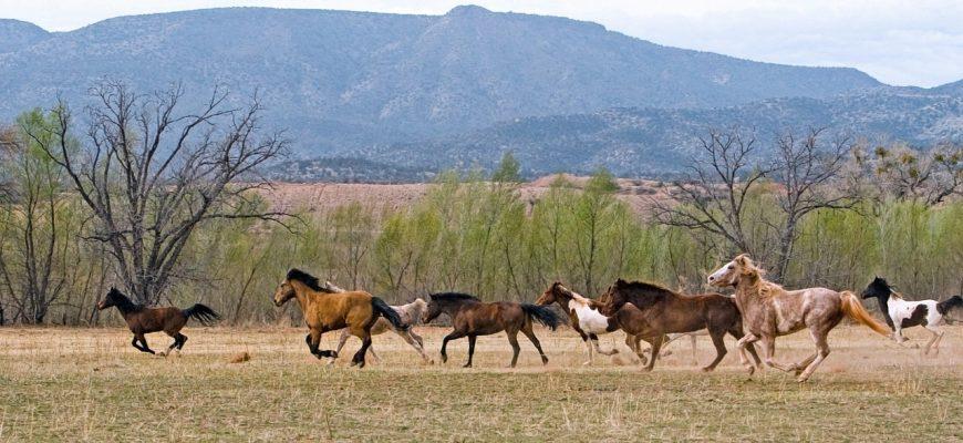Казахстан: Табун лошадей шымкентского чиновника вытаптывает поля крестьян