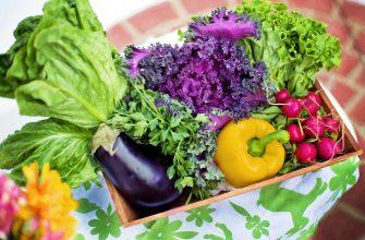 Первые в этом году овощи отправили узбекские фермеры в Казахстан