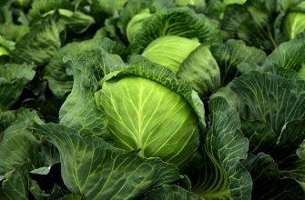 Холода нанесли итальянскому сельскому хозяйству урон на 300 млн евро