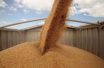 Россия: Экспорт омского зерна в семь раз выше прошлогоднего результата