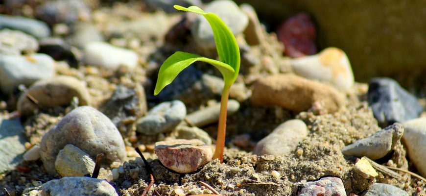 Агроэкология поможет рационально использовать то, чем мы владеем - ФАО