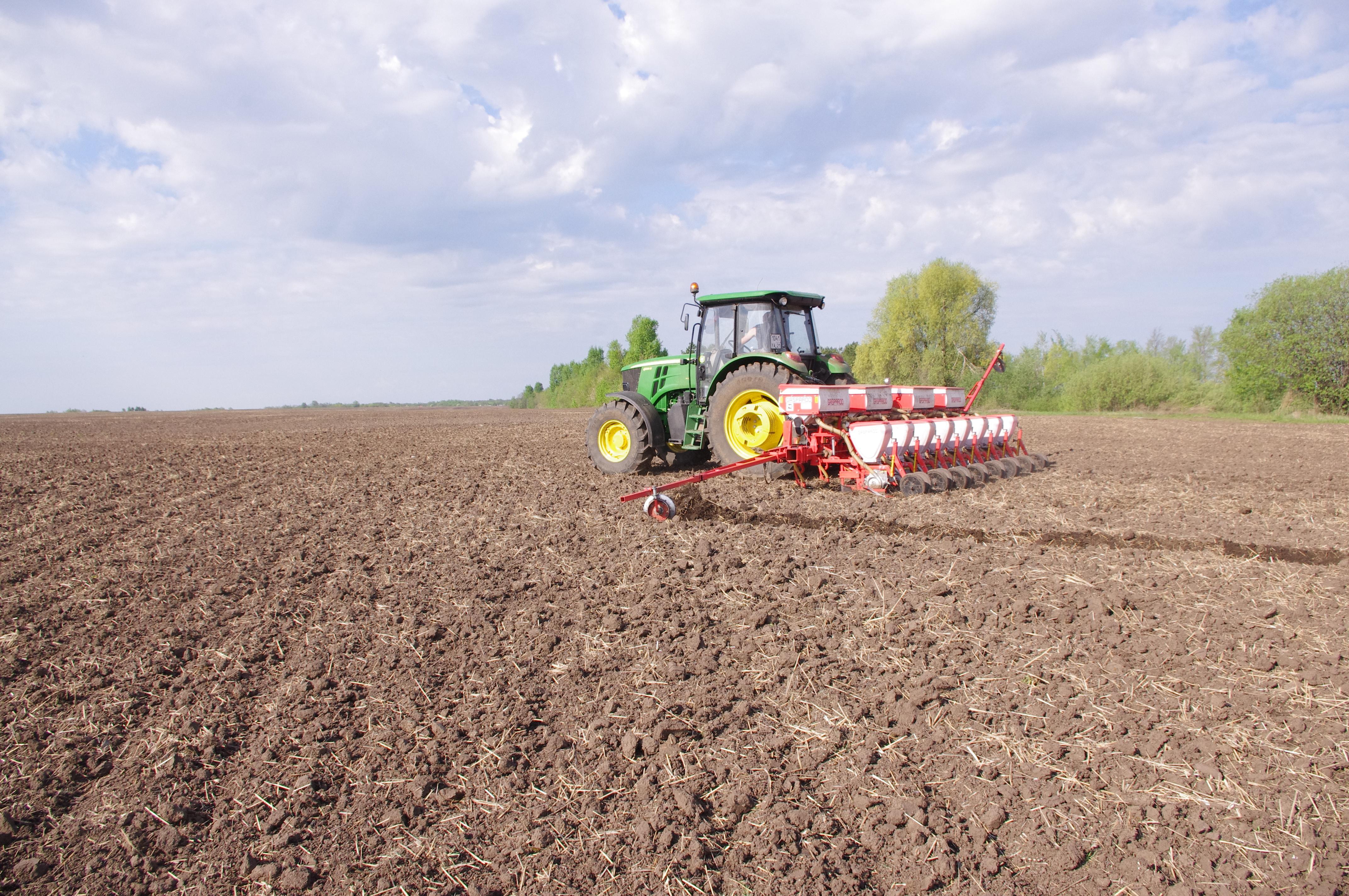 В Оренбуржье сохранят посевные площади под пшеницей твердых сортов