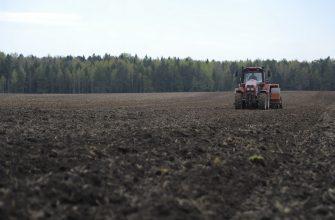 Россия: Общая площадь овощных культур в Омской области составляет 9,8 тыс. га