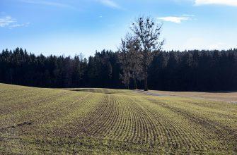 Россия: Погода затормозила сев в Татарстане