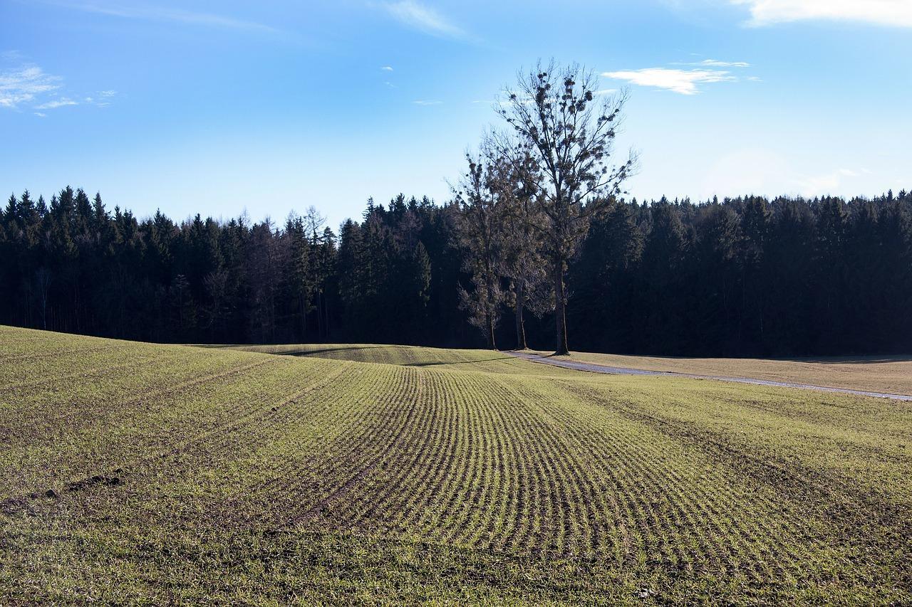 В Свердловской области яровой сев пройдет на площади 470 тысяч га