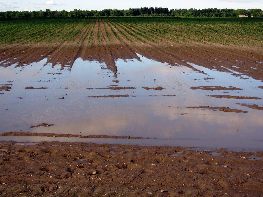 В Рязанской области посевную тормозят дожди