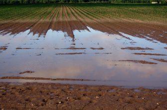 Россия: Плохая погода дает шанс разбогатеть курганским аграриям