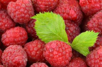 Украина за 9 месяцев нарастила экспорт плодов и ягод на 40%
