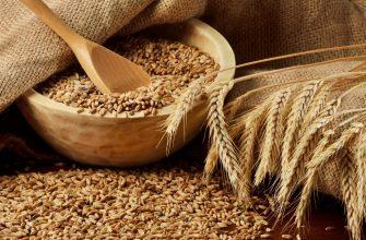 Потребление зерна в Китае вырастет до 394 млн. тонн в 2018-19 МГ