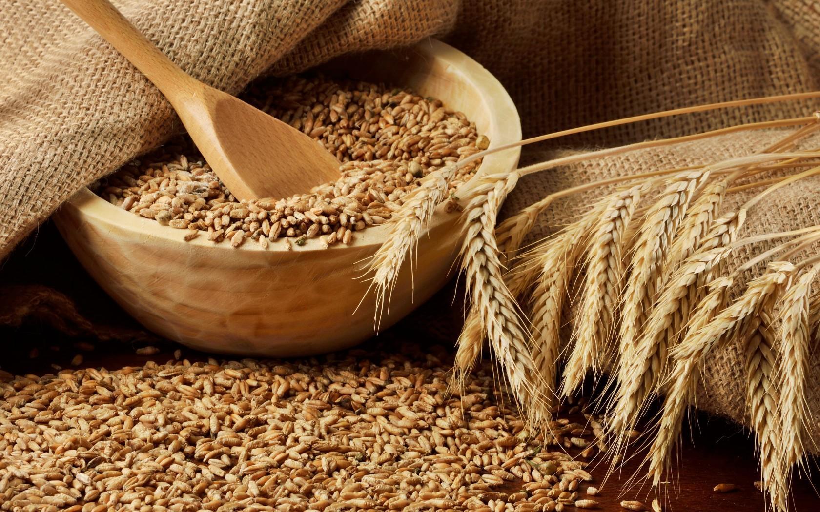 В четверг котировки пшеницы в США и Европе все повысились