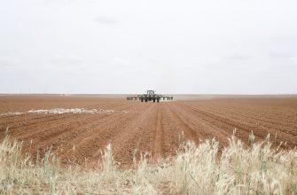 Казахстан: Сегодня рынок диктует, что сеять