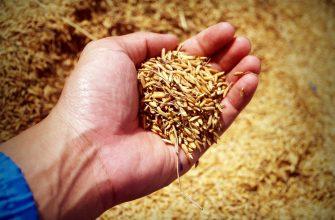 Новая неделя началась в США и Европе с падения пшеницы