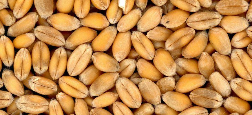 В 2018/19 сельхозгоду Россия импортировала 1,9 млн тонн зерна и продуктов переработки