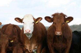 В Восточном Казахстане раскрыта кража 43 голов скота