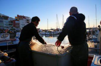 Почему сокращается улов в Черном море?