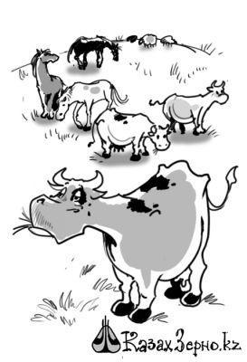 Кто зарабатывает на «мясном Эльдорадо» Казахстана