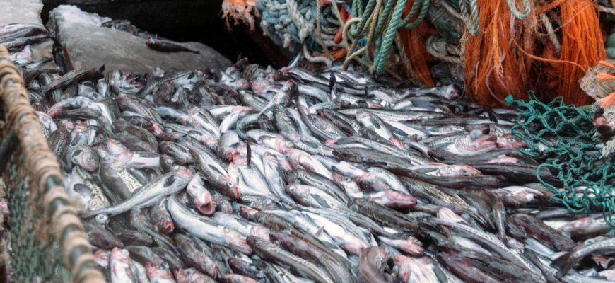 Российские рыбопромышленники наращивают объем добычи