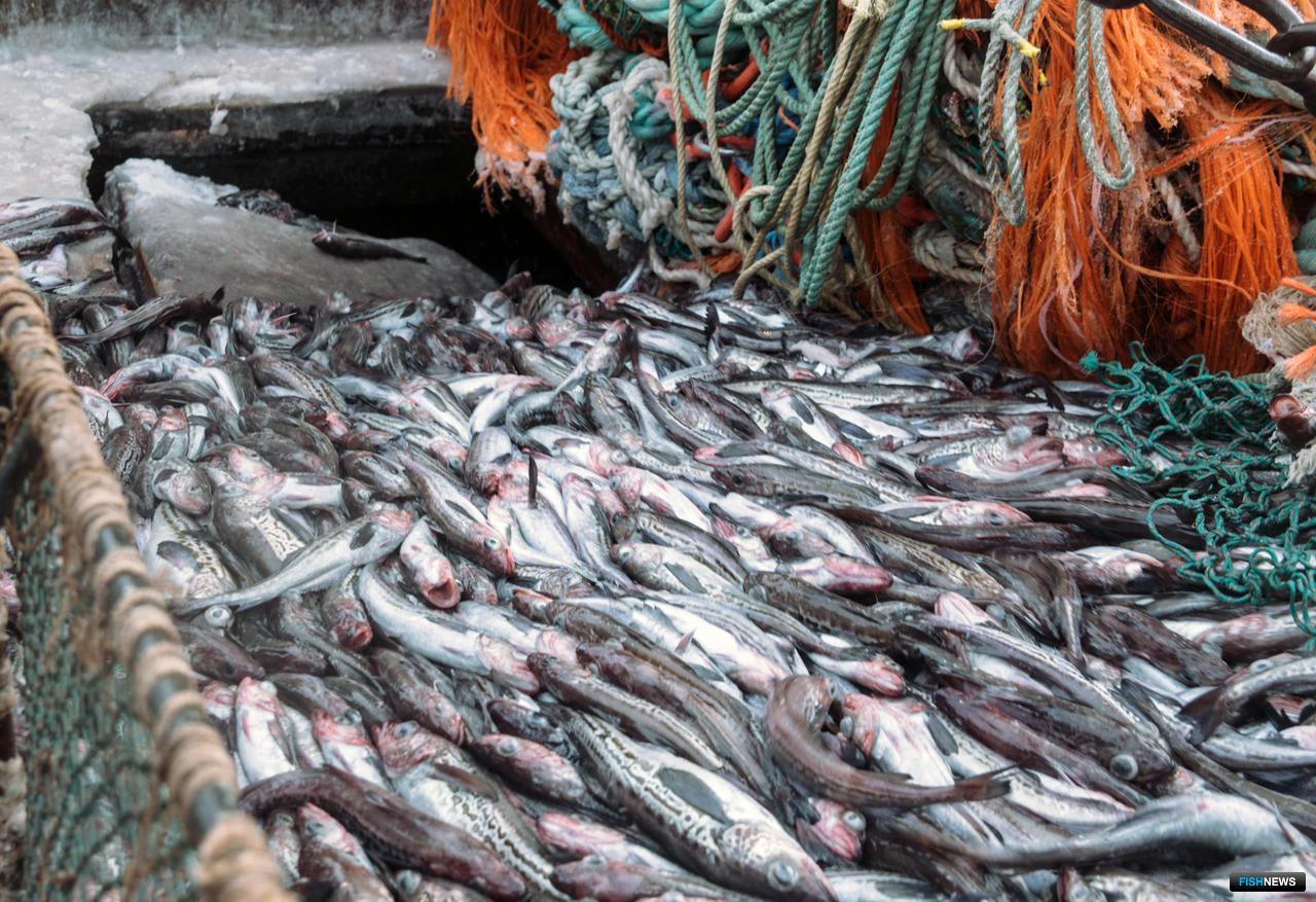 Страны Африки увеличивают экспорт рыбы и рыбопродукции из России