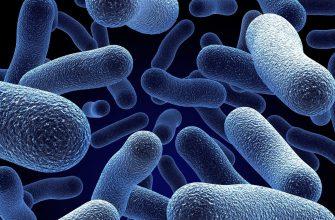 Бактерии превращают жир в биопластики