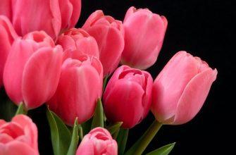 Бизнес по-казахски: перепахать поля тюльпанов в Таугуле, чтобы купить их в Голландии