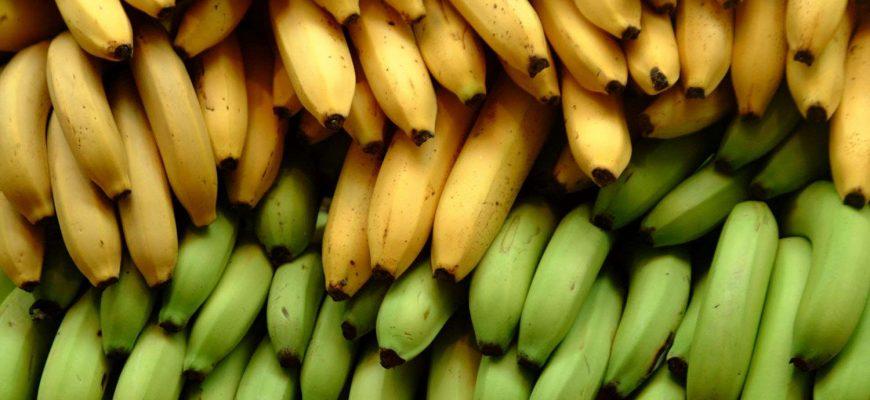 В Россию не пустили 23 тонны бананов из Эквадора
