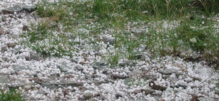 Россия: Кубанским аграриям компенсируют потери за урожай, погибший от града