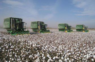 Как удалось хлопкоробам Туркменистана собрать приличный урожай – остается секретом