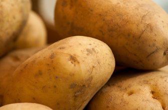 Безболезненный картофель