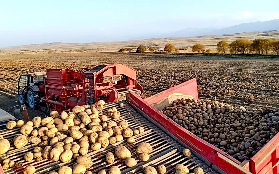 В Волгоградской области соберут около 1 млн тонн овощей