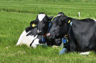 14 способов повысить качество молока