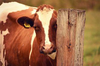 В Карагандинской области обнаружены животные с симптомами кожного заболевания
