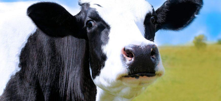 Как поднимать сельхозпромышленность без кормовой базы?