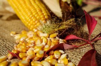 Россия, Украина и Бразилия забирают у США долю в экспорте зерна