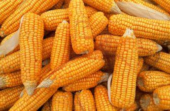 Потребление кукурузы в ЮАР увеличится до 13 млн тонн в 2021-22 МГ