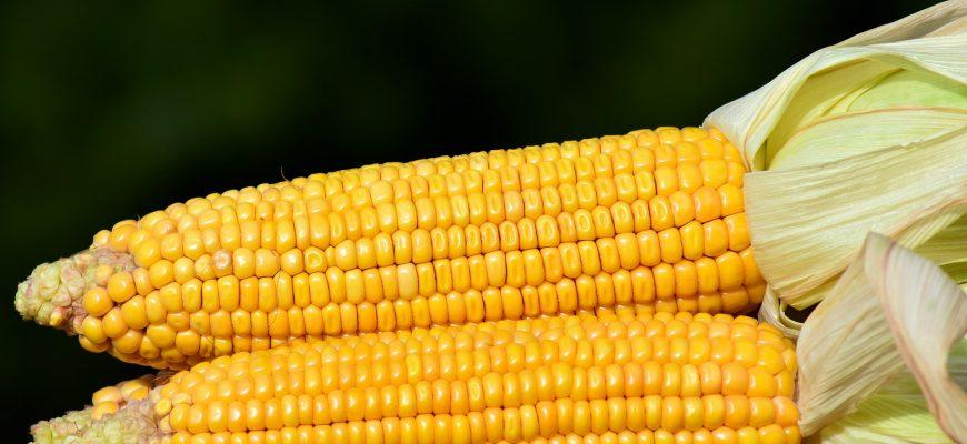 Новую неделю пшеница и кукуруза в США начали с глубокого падения