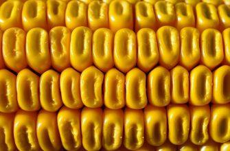 Бразилия экспортировала уже более 40 млн. тонн кукурузы