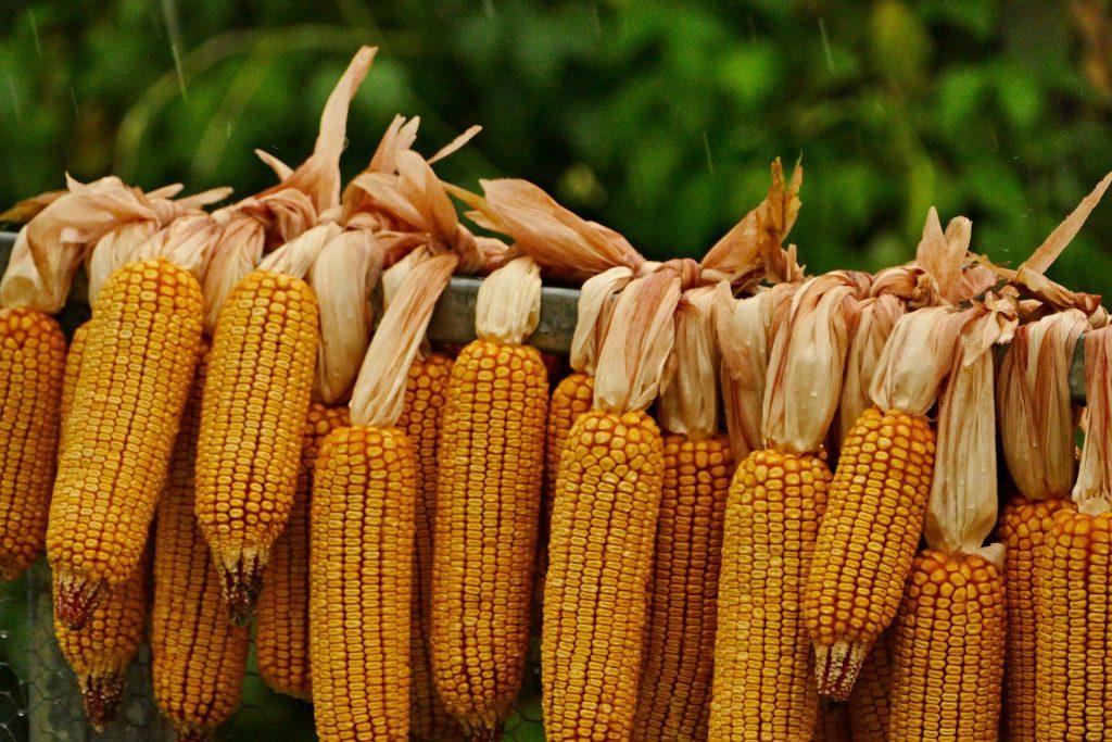 Казахстанский зерновой экспорт может затеряться в растущем пшеничном потоке России
