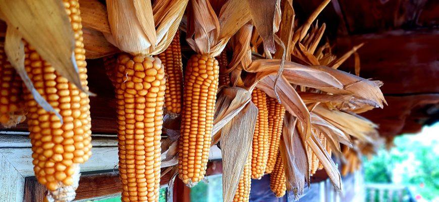 Объем потребления кукурузы в Японии составит 16,2 млн. тонн в 2019-20 МГ