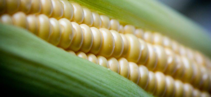 На мировом рынке простаивает кукуруза из-за интереса к сое