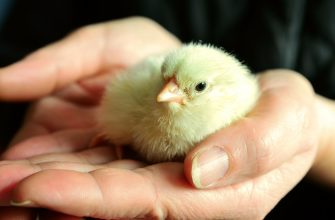 В РФ на поддержку птицеводства и рыбохозяйственного комплекса выделят более 2 млрд рублей