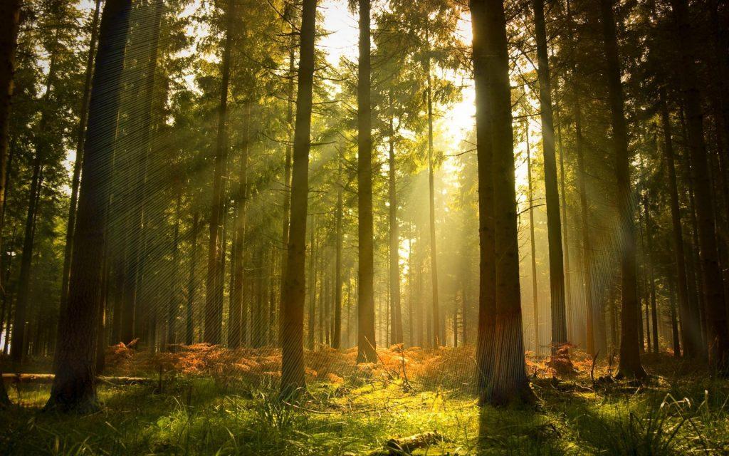И шумит чалдайский лес