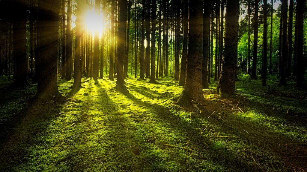Жизнь, отданная лесу