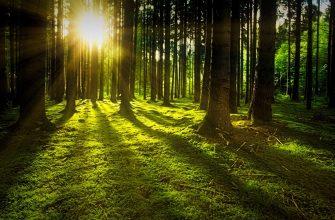 В Китае создадут Национальный парк тропических лесов