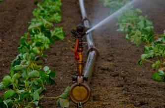 80 тыс. га земель обеспечат поливной водой в Туркестанской области