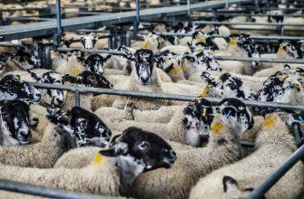 Как НАНОЦ поддерживает животноводство