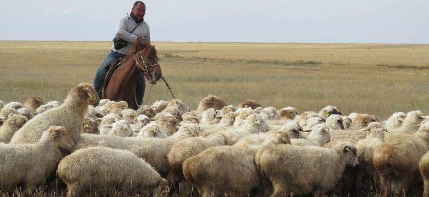 Малые фермерские хозяйства не должны остаться на обочине процесса цифровизации - ФАО